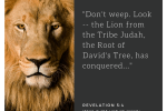 dont-weep-look-the-lion-from-the-tribe-judah-the-root-of-davids-tree-has-conquered