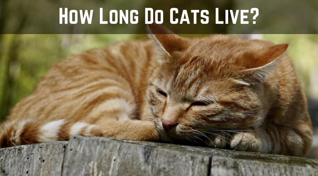 How Long Do Cats Live  Cool Cat Tree House