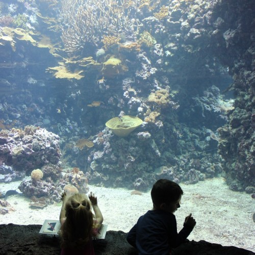 Burgers Zoo review Coole Ouders online magazine voor ouders
