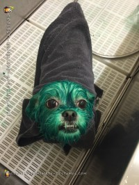 Coolest Homemade Costumes | Doggie Doubles as Oscar the ...