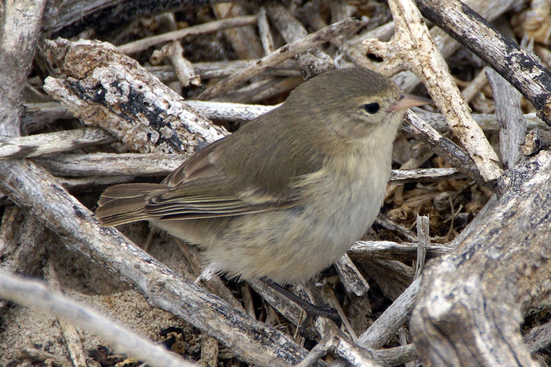 Darwin S Finches