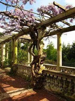 Pergola Ideas For Your Garden