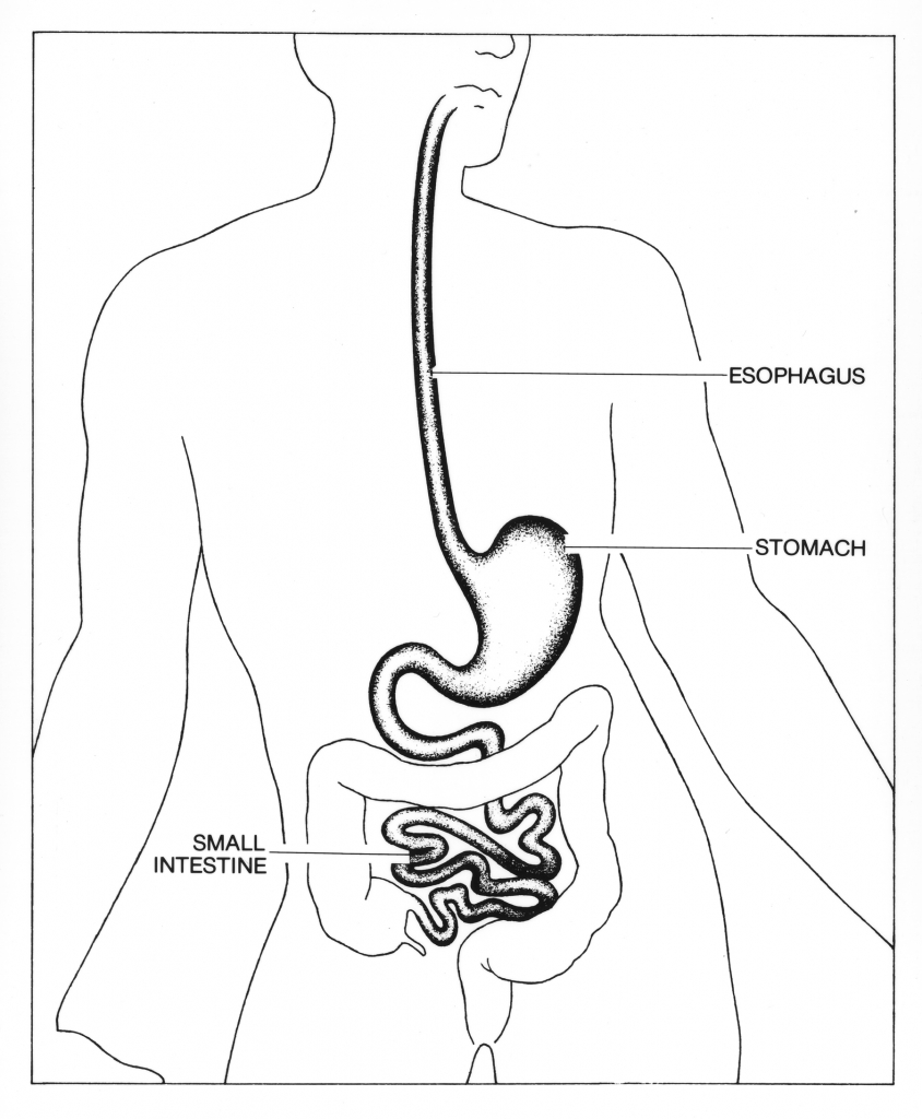 hight resolution of esophagus diagram