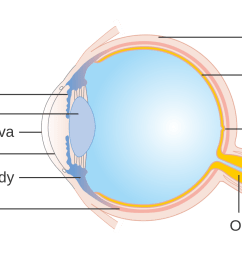 cornea eye diagram [ 1280 x 816 Pixel ]