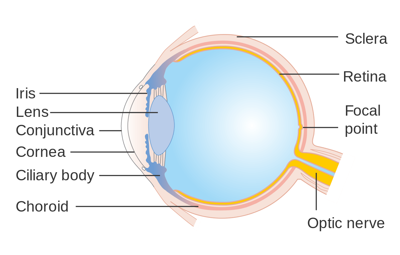 hight resolution of cornea eye diagram