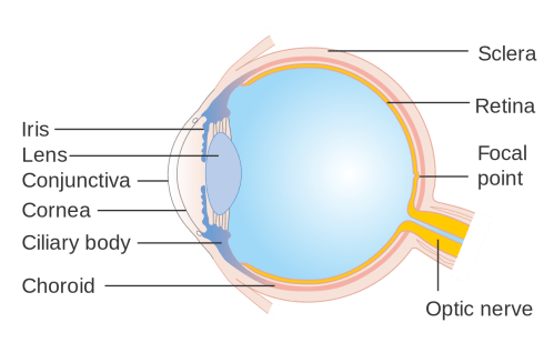 small resolution of cornea eye diagram