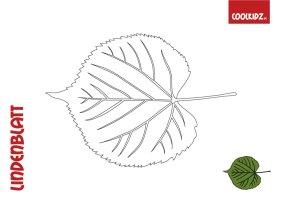 malvorlage herbstblatt   Coloring and Malvorlagan