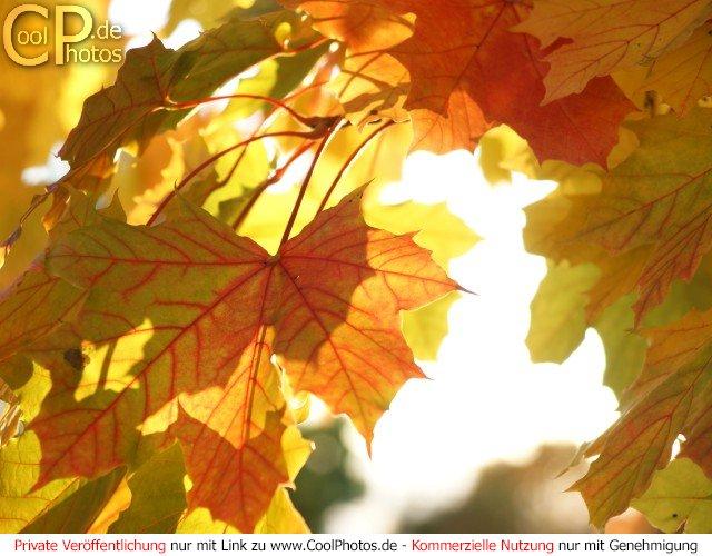 CoolPhotosde  Fotos  Herbst  Herbstfotos