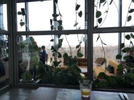 Dschungel im Restaurant NENI
