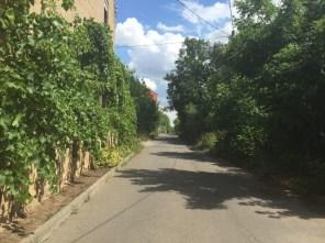 Allee in Dröschkau