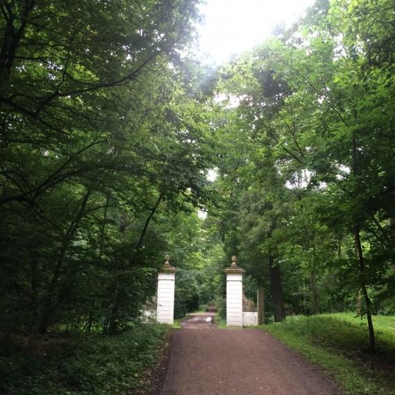 Elberadweg im Waldgebiet Dessau