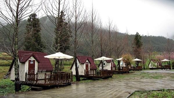 到武陵農場住小木屋露營賞櫻~可愛露營屋 @麻吉小兔吃貨旅行團