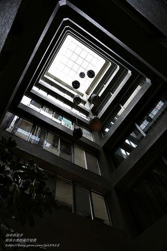 台中鳥日子-158