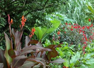 Tropical Garden Design