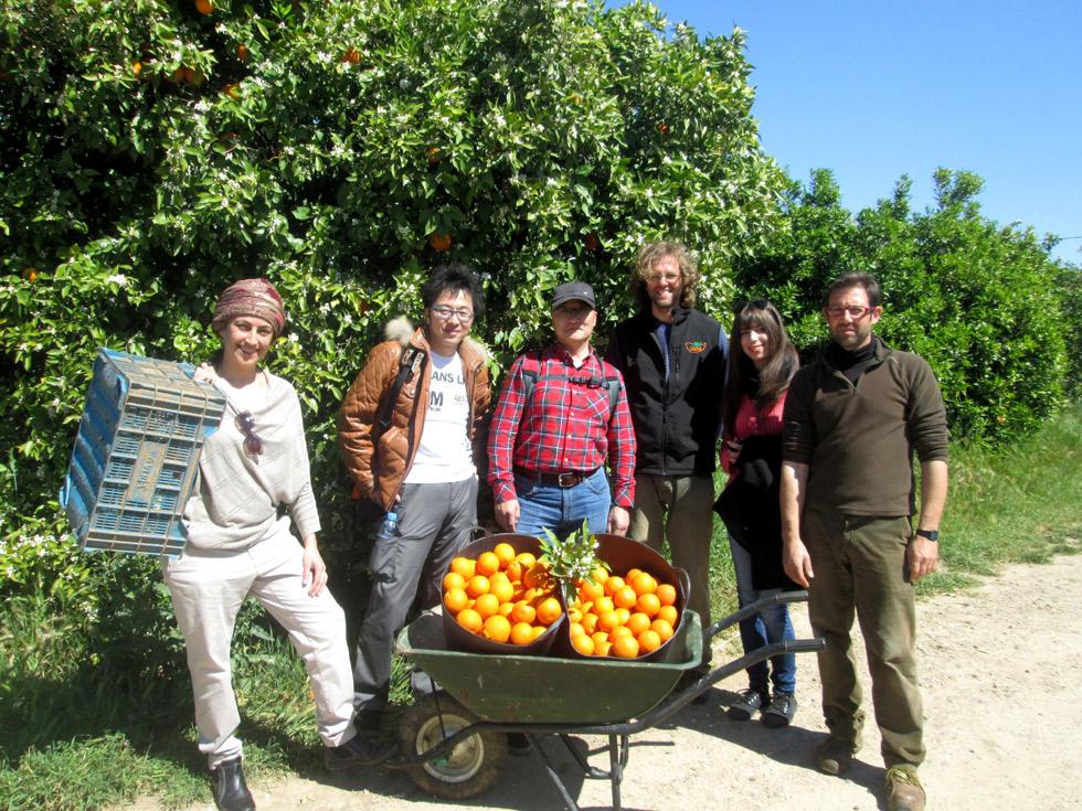 Fam trip en la huerta de naranjas ecológicas de Biovalle (Palma del Río)