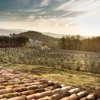 Masia Can Viver | Una escapada para los que quieran descubrir el mundo del aceite