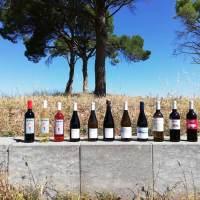 Vins Petxina