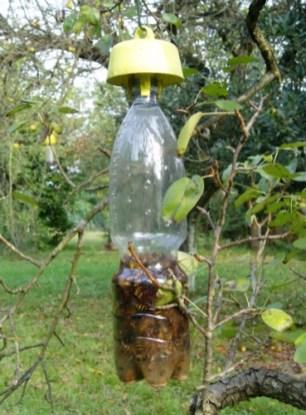 coopérative-apicole-de-la-loire-tap-trap-le-bouchon-piege (3)