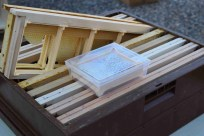 Le miel en section présenté par Jean-Pierre DARNE