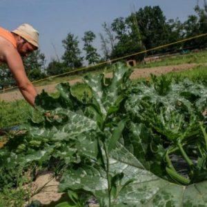 L'orto ecologico d'estate: consigli per risparmiare acqua