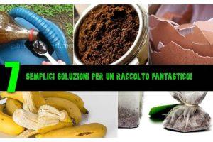 7 semplici soluzioni per ottenere dei risultati incantevoli con le tue piante