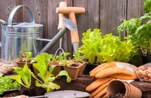 Marzo: i consigli per orto, giardino e frutteto