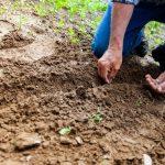 Guida ai lavori dell'orto di marzo dalla semina al raccolto