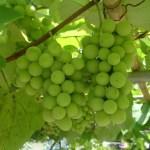 cooperative vino