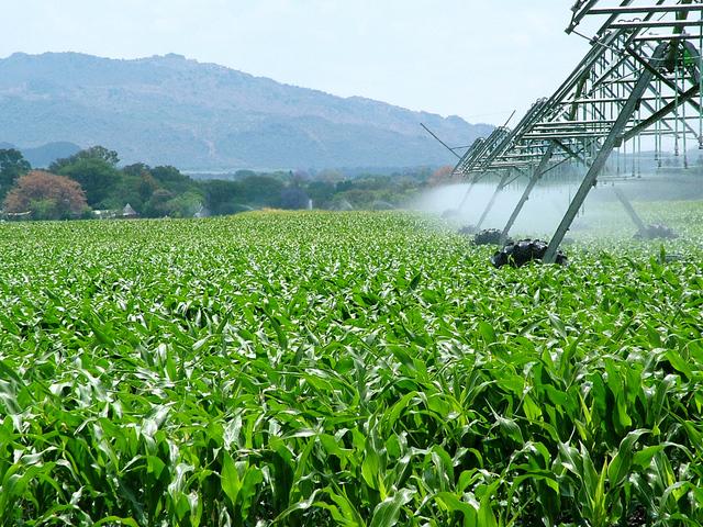 Mipaaf-Ubi Banca: 2 miliardi per l'accesso al credito delle imprese agricole