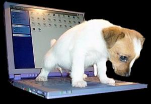 laptoppeedog