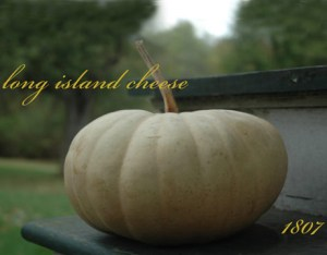 long-island-cheese-squash-lg