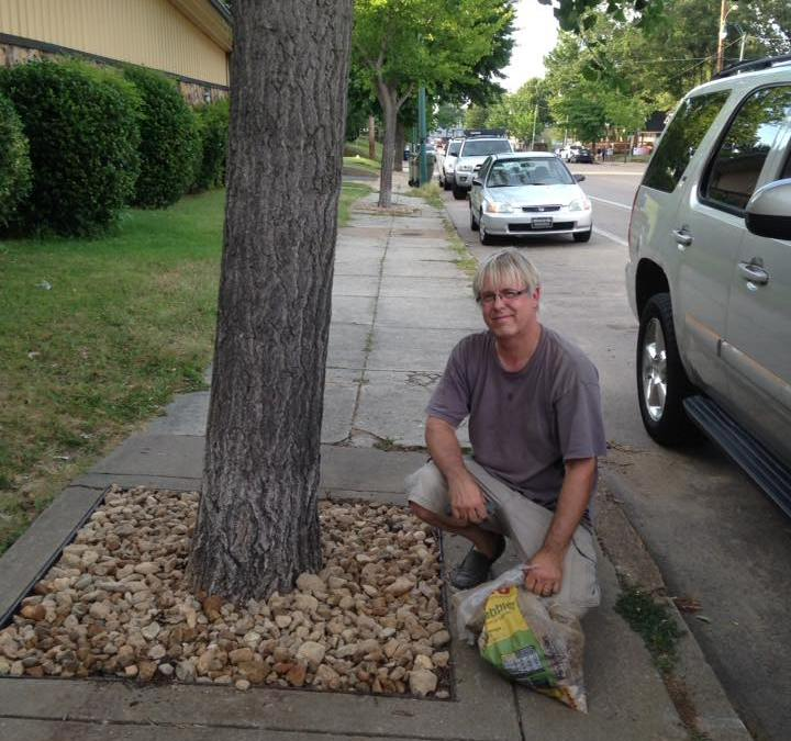 Stoning the Ginkgo Trees