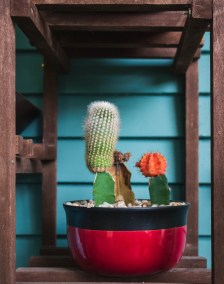 cactus pot (Kenzie Campbell pic)