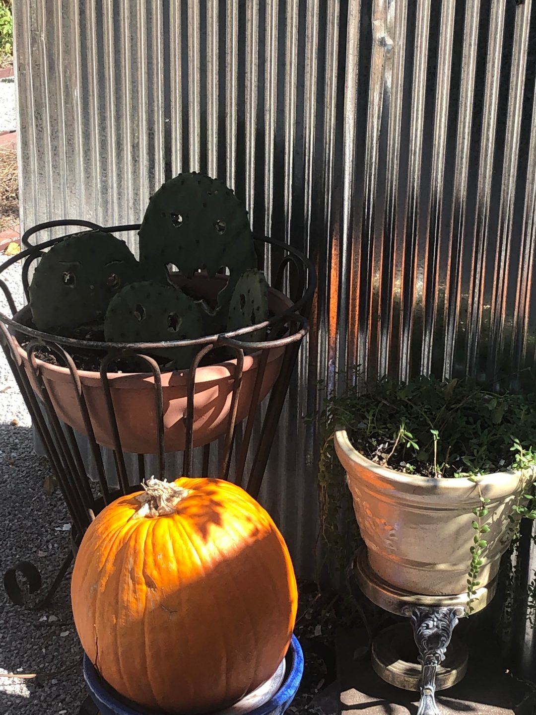 Halloween Container Ideas