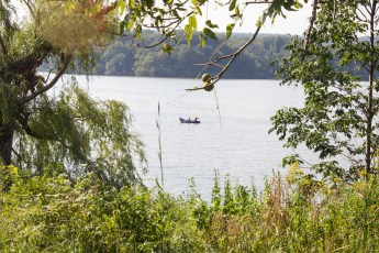 Cootes Paradise wetlands
