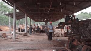 Guatemala Forescom Acondicionamiento de jardín Comercio Justo y FSC