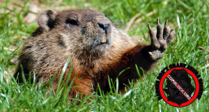Witnesses Say Cops Used Golf Cart To Chase and Kill Groundhog