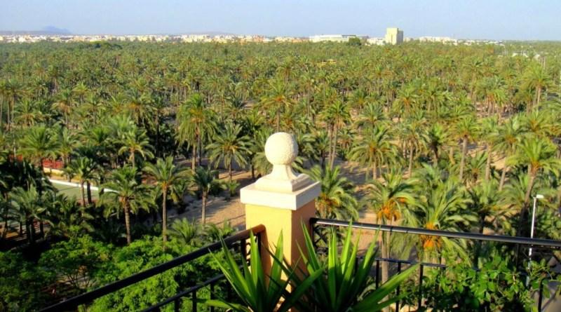 Un pionero estudio del Palmeral permite localizar y talar 18 palmeras con riesgo de caída