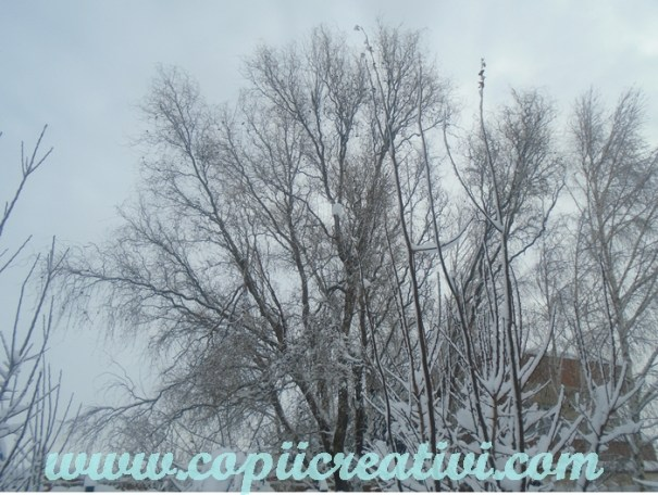 iarna-copaci