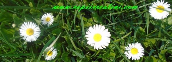 flori-11