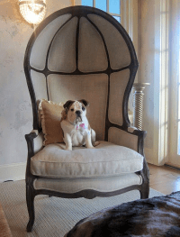 Restoration Hardware Versailles Burlap Backed Chair - Copy ...