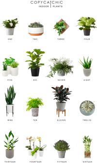 Home Trends | Indoor Plants - Copy Cat Chic