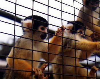 Students act more like caged monkeys.