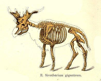 Sivatherium