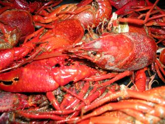 louisiana-crawfish