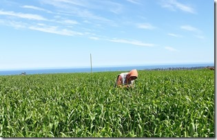 Foto 1_trabajo en terreno secano costero