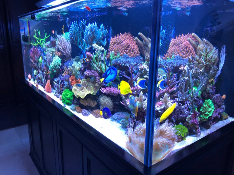 want to set up a reef tank start here coral euphoria