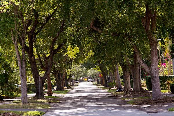 coral-gables-treelined-street