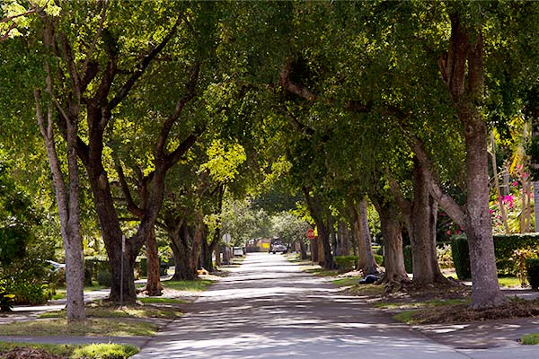 coral-gables-treelined-street
