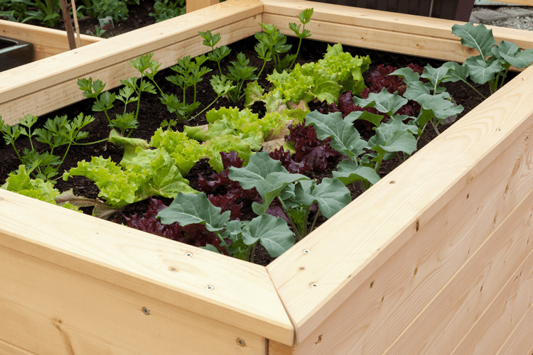 Raised-Bed-Vegetable-Garden